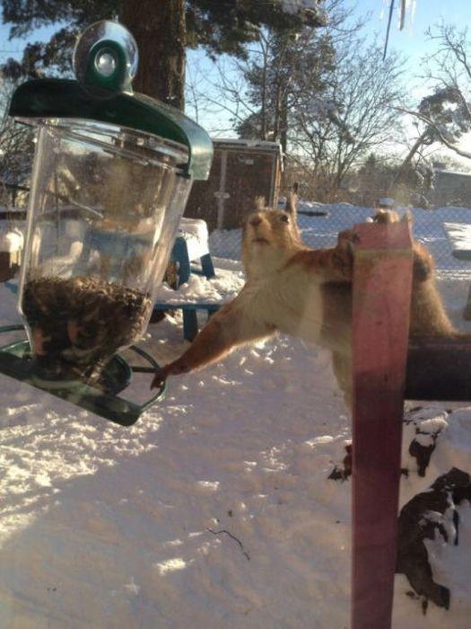Животные, которых поймали с поличным (25 фото)
