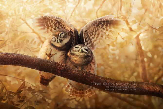 Многогранные совы в фотографиях Саси Смита (13 фото)