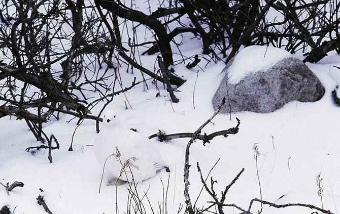 «Исчезновение» в фотопроекте Арта Вульфа (23 фото)