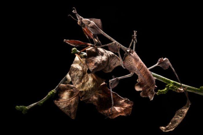 Мастера маскировки в животном мире (35 фото)
