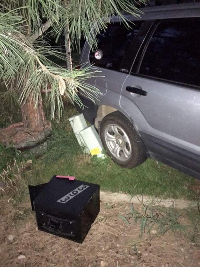 Медведь забрался в автомобиль и немного на нем прокатился (2 фото)