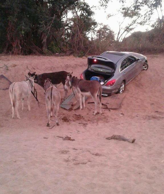 Ослы по руслу Лимпопо тащили угнанный Mercedes (2 фото)