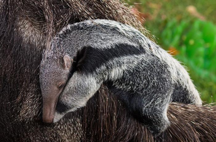 Умилительные фото детенышей животных (25 фото)