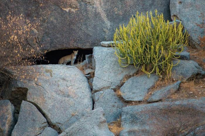 Дикая Индия в фотографиях зоолога Акселя Гомиля (14 фото)