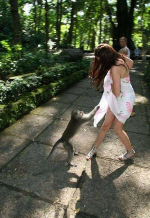 Животные пытаются раздеть девушек (13 фото)