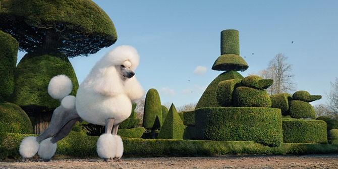Шедевральные портреты животных в исполнении Тима Флака (16 фото)