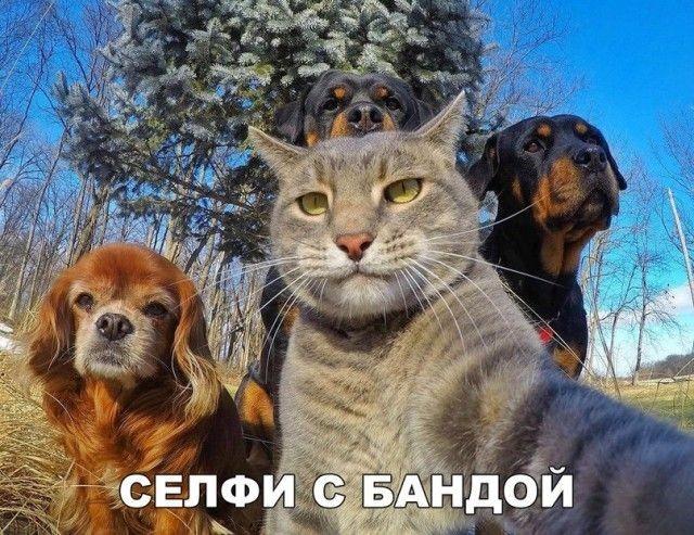 Подборка прикольных фотографий (106 фото)