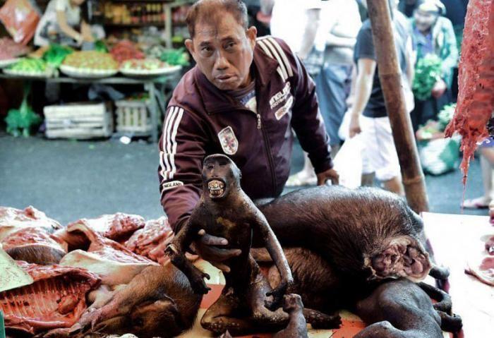 Экзотические животные на индонезийских продовольственных рынках (7 фото)