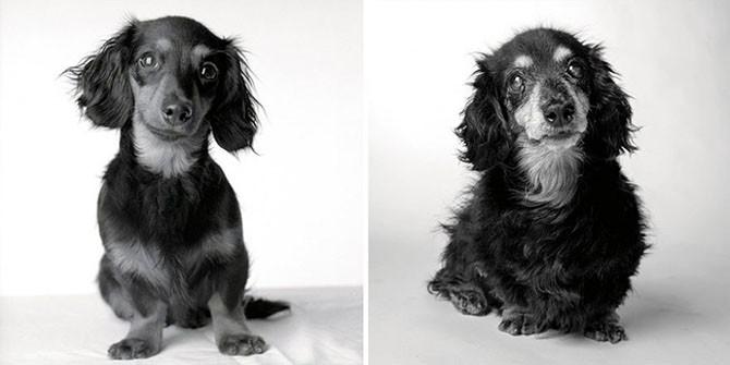 Как взрослеют собаки (13 фото)