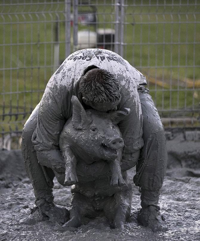 Свинский фестиваль в Квебеке (17 фото)