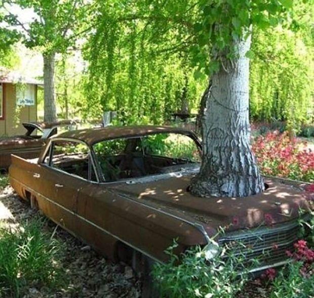 Необычные находки в деревьях (19 фото)