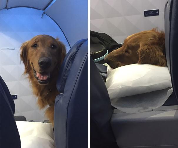 Животные в самолете: забавно и трогательно (40 фото)