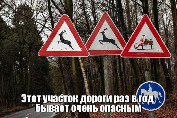 Смешные картинки с подписями (19 фото)