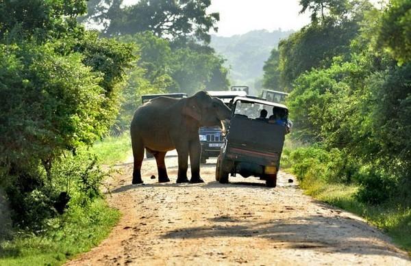 Голодный слон (8 фото)