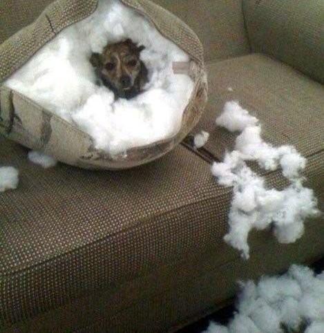 14 забавных идей, как не замерзнуть этой зимой (15 фото)