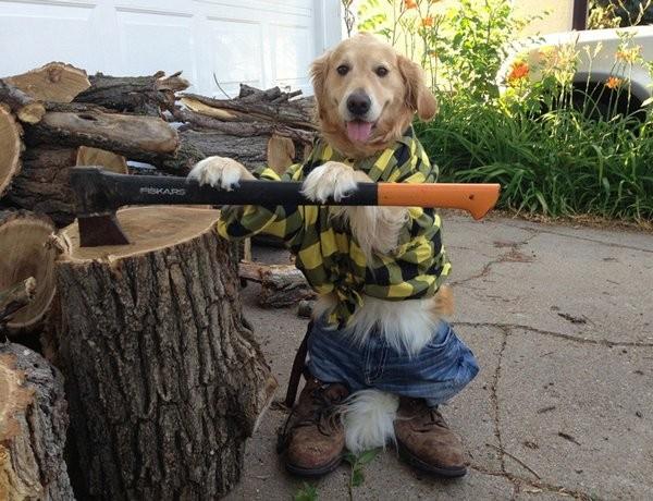 Собака как человек (14 фото)