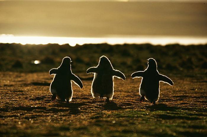 Мимишные фотографии детенышей животных (27 фото)