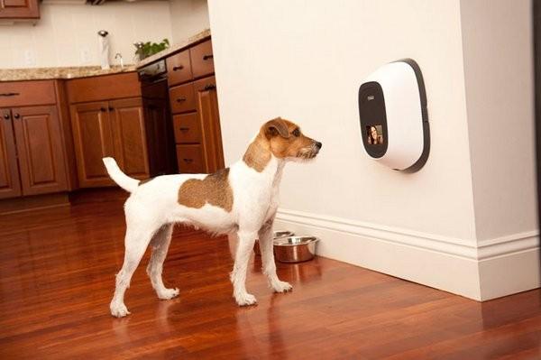 Видеотелефон для собак (3 фото)
