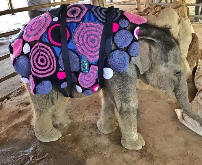 Яркие теплые одеяла согрели замерзающих слонят (5 фото)