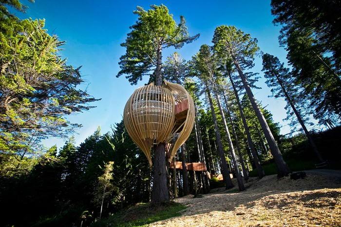 Самые удивительные дома на деревьях (11 фото)
