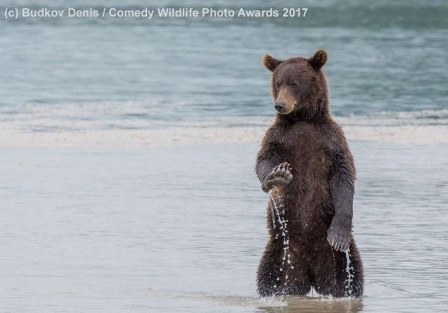Самые комедийные животные (27 фото)