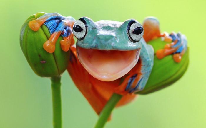 Забавные животные (10 фото)