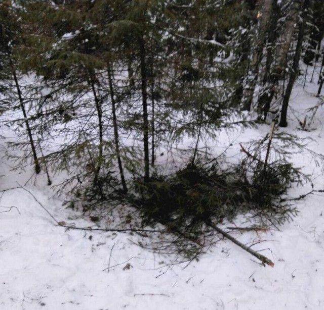 Собаки помогли выжить в лесу пропавшим подросткам (2 фото)