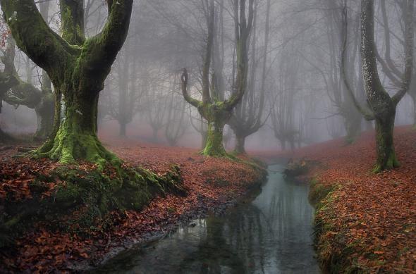 Мистический лес (18 фото)