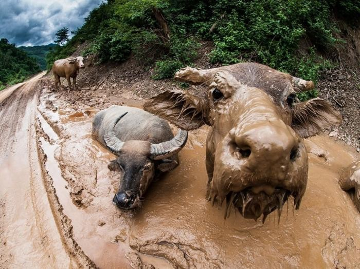 Лучшие кадры января от National Geographic (15 фото)