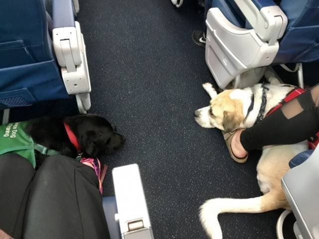 Неожиданные и забавные попутчики в самолете (25 фото)