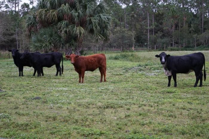 Фермерское хозяйство голливудских знаменитостей (11 фото)