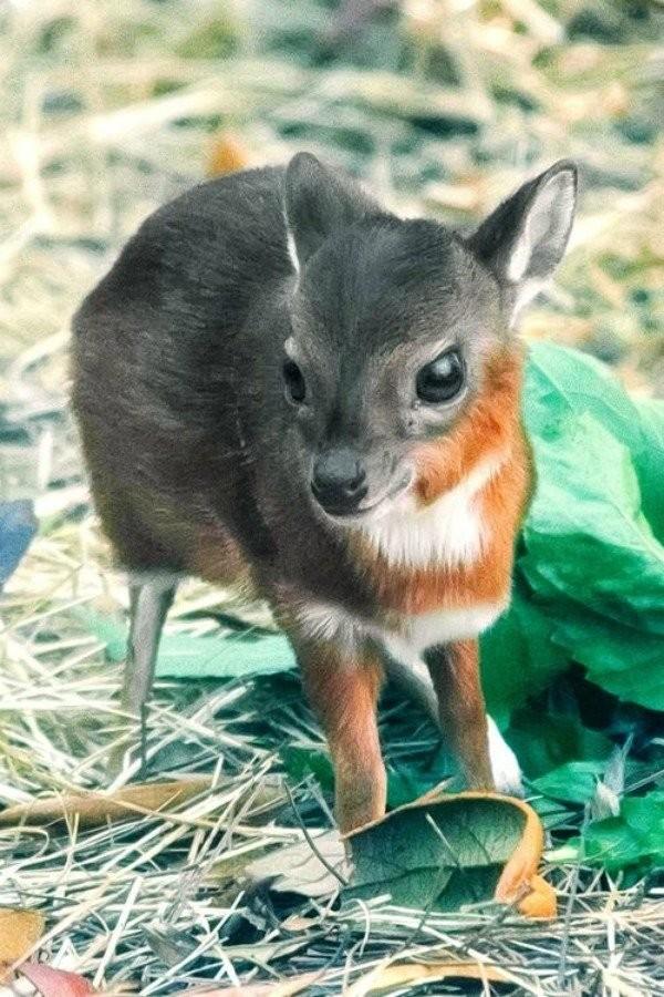 Крошечные версии обычных животных (11 фото)