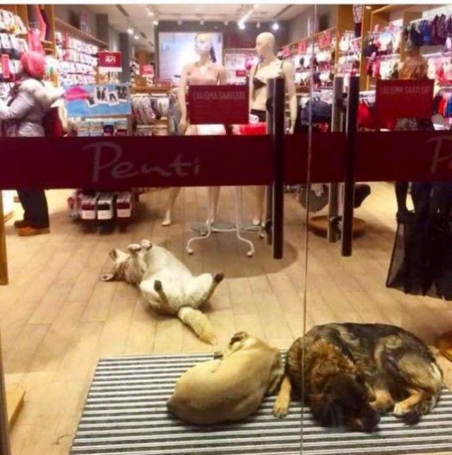 Как в Стамбуле помогают согреться бездомным животным (5 фото)
