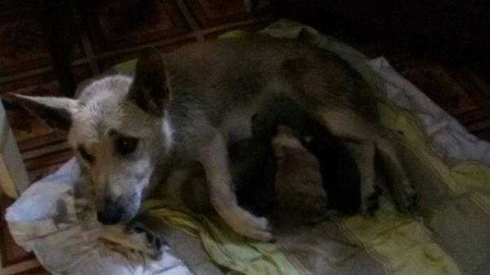 Мужчина стал спасителем собачьей семьи (6 фото)
