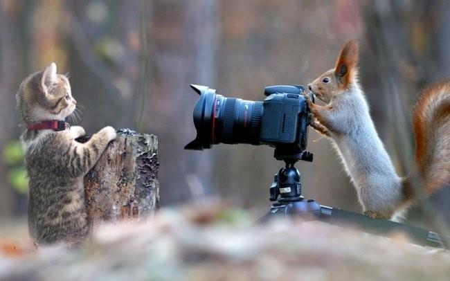 Мастера фотошопа (28 фото)