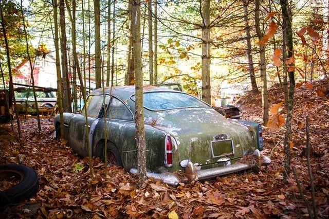 29e899 Находка в лесу ценной в 250 000 долларов (10 фото)