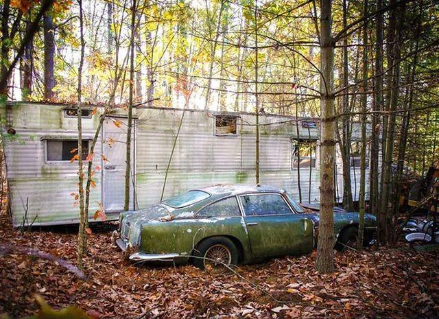 b2543a Находка в лесу ценной в 250 000 долларов (10 фото)