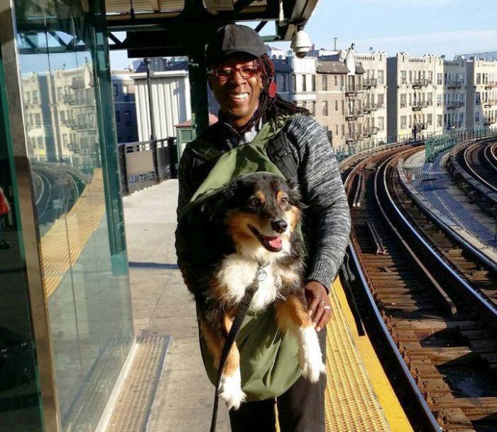 Как возят собак в метрополитене Нью-Йорка (13 фото)