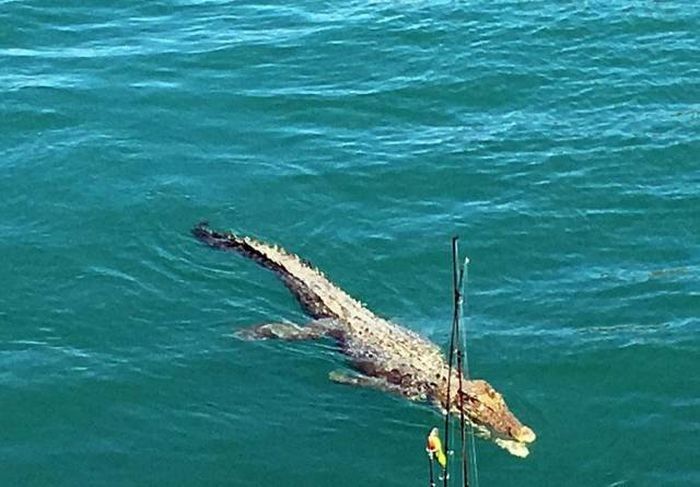 Типичная рыбалка в Австралии (6 фото)