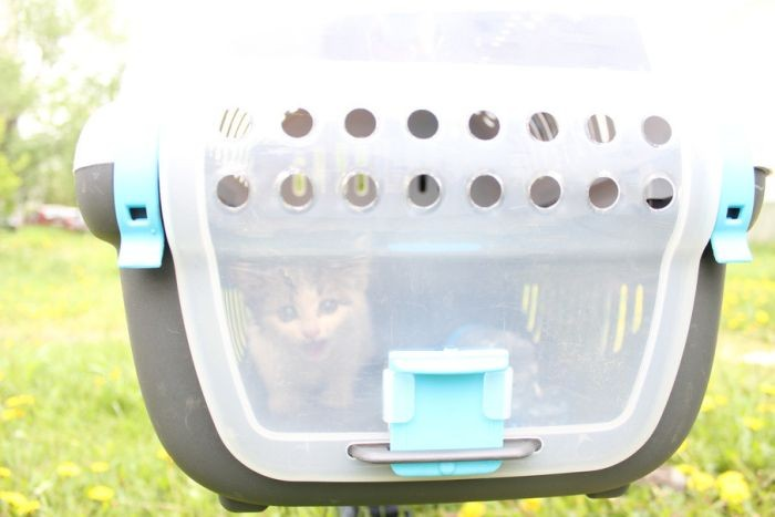 Котёнок застрял в трубе под опорой фонарного столба (6 фото)