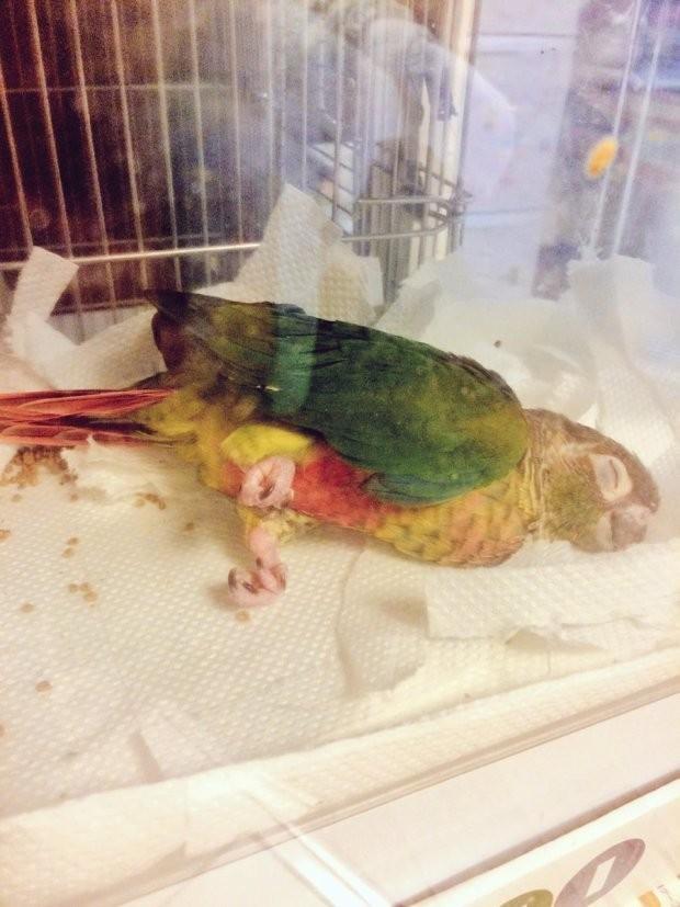 Животные, которые спят в самых забавных позах (22 фото)