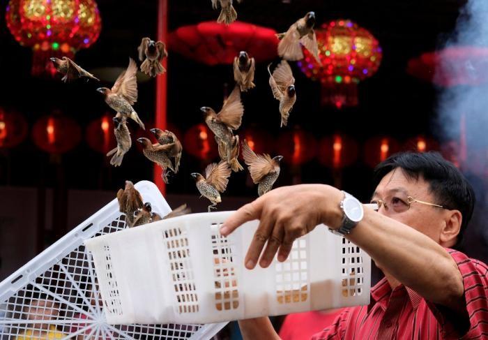 Как в Китае отметили год желтой земляной собаки (23 фото)