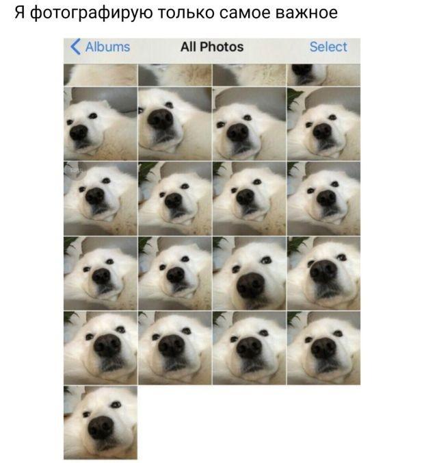 Подборка прикольных фотографий (55 фото)
