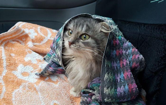 Россиянин спас кошку, которая почти замерзла до смерти (8 фото)