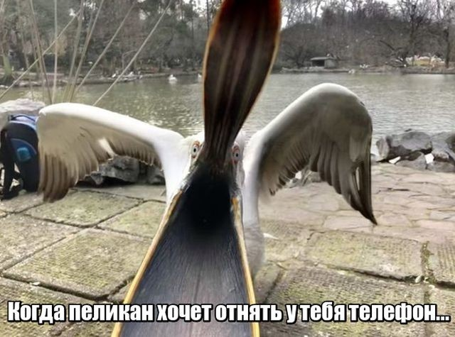 Подборка прикольных фотографий (47 фото)