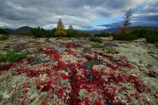 Красоты Колымского края (7 фото)
