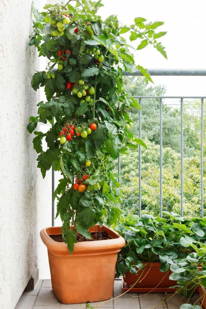 Сделай сад прямо у себя дома (8 фото)