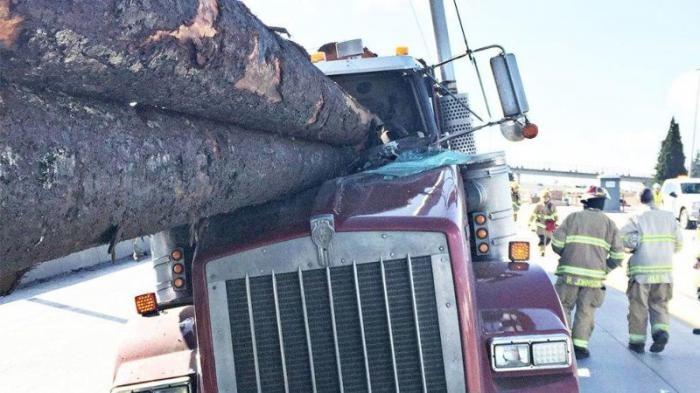 Жуткая авария с участием двух лесовозов (6 фото)