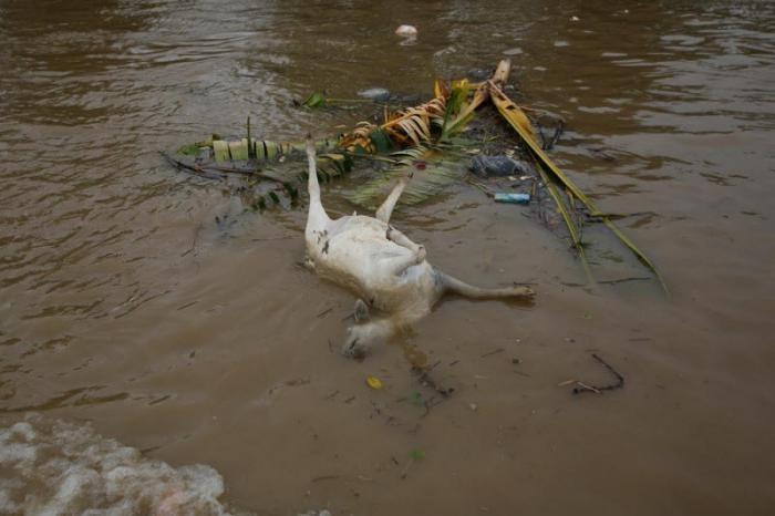 Правительство Индонезии собирается очистить самую грязную реку (21 фото)