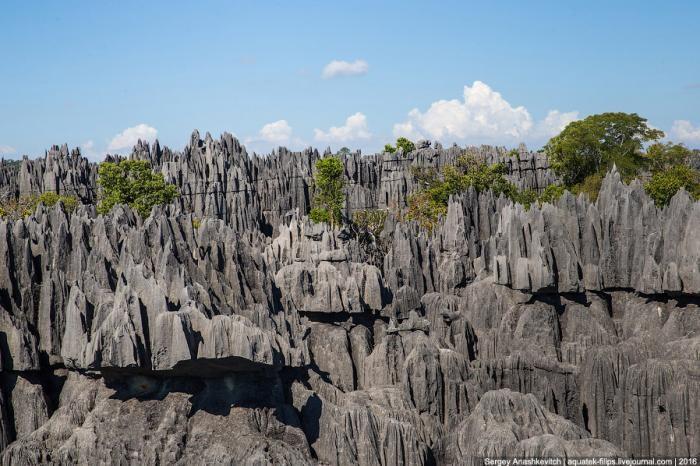 Это стоит увидеть своими глазами! Каменный лес Цинги (27 фото)